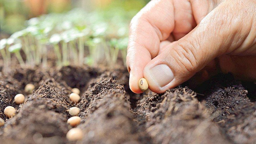 Sayıştay ortaya çıkardı: Tarım ve Orman Bakanlığı yetkisiz üretilen tohumluklara sertifika vermiş