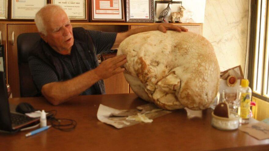 Mersin'de bulundu, tam 23 kilo