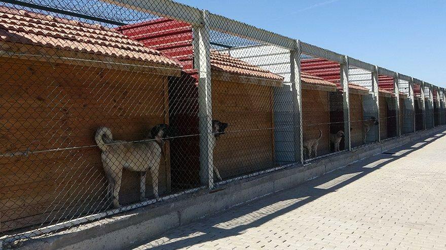 Kangal köpekleri bu tesiste korunuyor