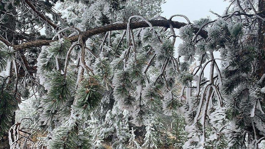 Sarıkamış buz kesti: Termometreler eksi 10'u gördü