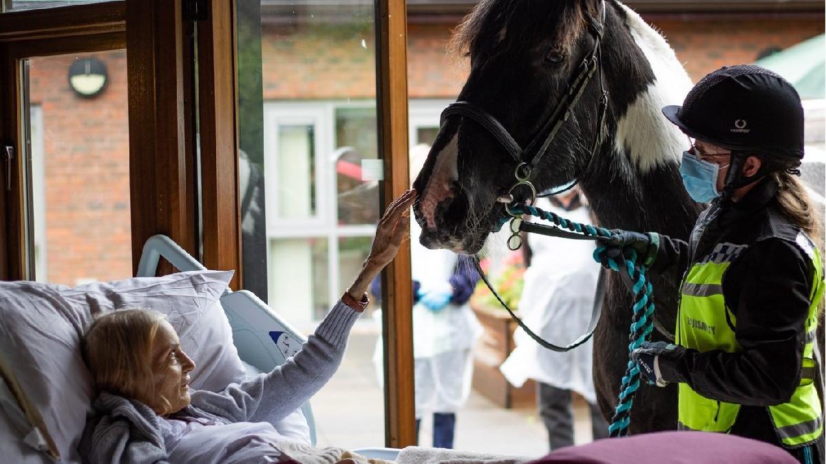 Sosyal medyayı duygulandıran veda... Atı ve köpekleri hasta yatağına getirildi
