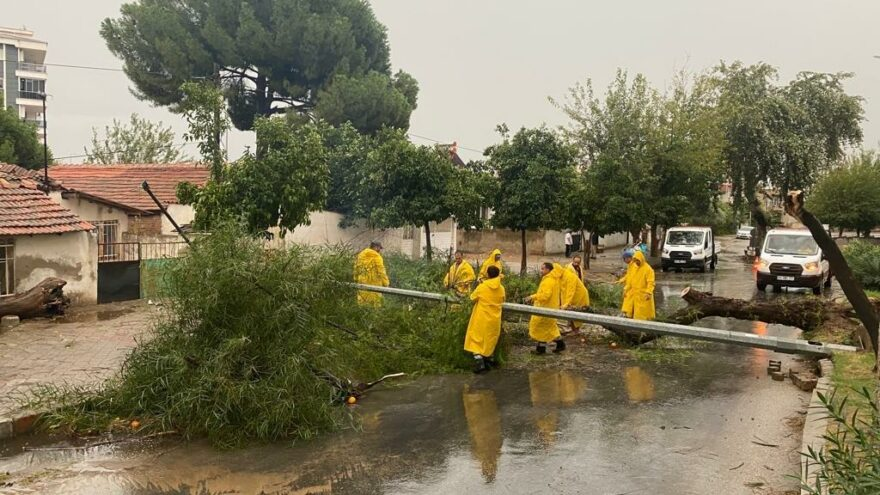 Aydın'da fırtına ağaçları devirdi