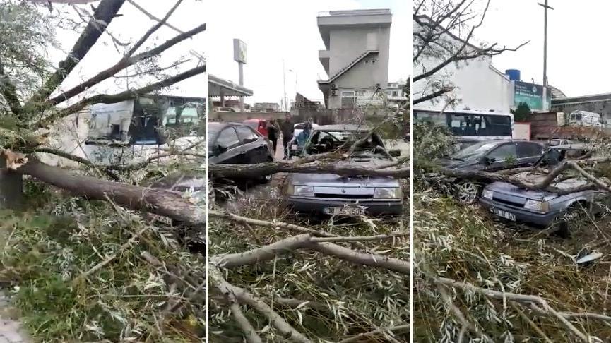 Kocaeli'de şiddetli rüzgar ağaçları devirdi