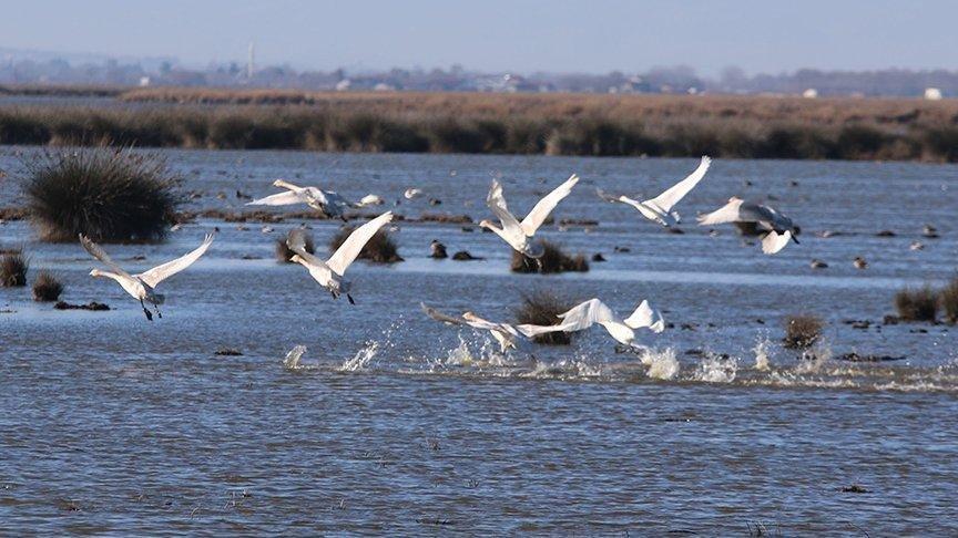 Kızılırmak Deltası'nda 84 yeni tür keşfedildi