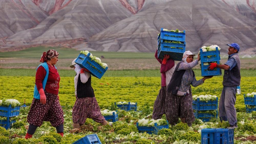 Tarımdaki kopuş sürüyor: Sigortalı çiftçi sayısı 552 binin altına indi