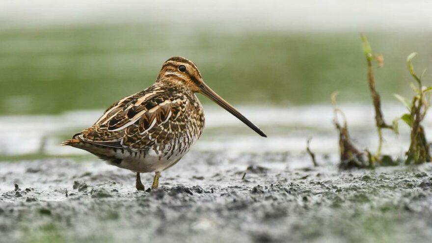 Avrupa alarm veriyor… Her beş kuş türünden biri yok olma tehdidiyle karşı karşıya
